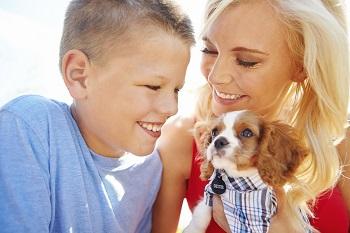 Emergencies Affect Pets, Too